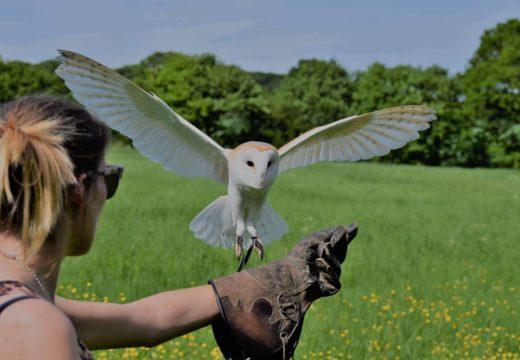 Birds of Prey at The Hop Farm in Kent!