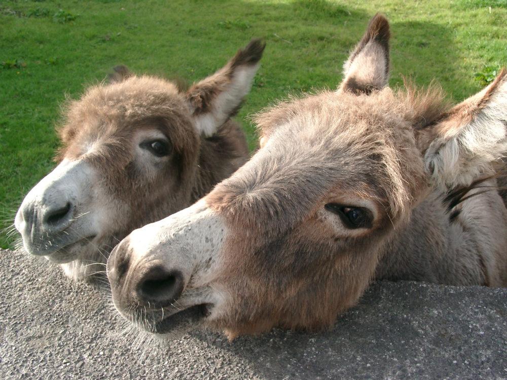 Donkeys Hop Farm