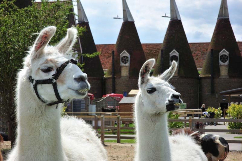 Zoo in Kent