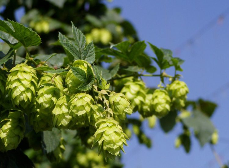 Discover The Hop Farm